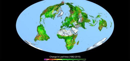Änderung der Blattfläche 1982-2015
